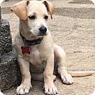 Adopt A Pet :: Agatha's Pup Cameo
