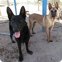 Adopt A Pet :: Mon Amie - San Tan Valley, AZ
