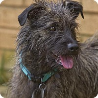 Adopt A Pet :: Shaggy - Huntsville, AL