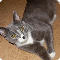Adopt A Pet :: Genevieve - East Brunswick, NJ