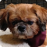 Adopt A Pet :: Romeo - Crystal Lake, IL