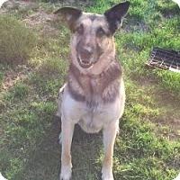 Adopt A Pet :: Rock*COURTESY POST* - Mill Creek, WA