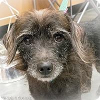 Adopt A Pet :: Oscar - Loudonville, NY