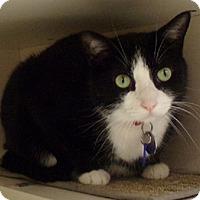 Adopt A Pet :: Sammie - St. Charles, MO