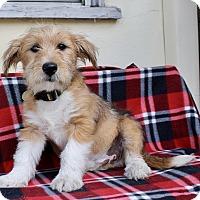 Adopt A Pet :: Phelps - Los Angeles, CA