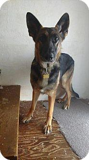 German Shepherd Dog Dog for adoption in Racine, Wisconsin - Classy