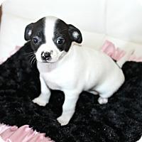 Adopt A Pet :: Dottie- pending - Temecula, CA