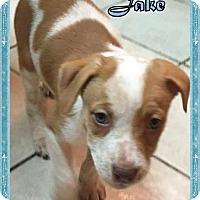 Adopt A Pet :: Jake - Ringwood, NJ