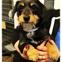 Adopt A Pet :: Temperance - Los Alamitos, CA