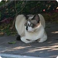 Adopt A Pet :: Thor - Naples, FL