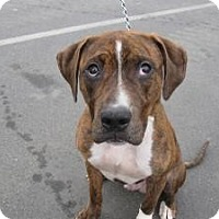 Adopt A Pet :: 243 Fetch - Berlin, CT