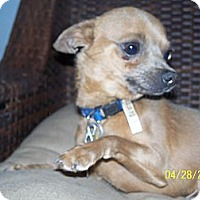 Adopt A Pet :: Mouse - Andrews, TX