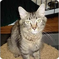 Adopt A Pet :: Suzi - Mission, BC
