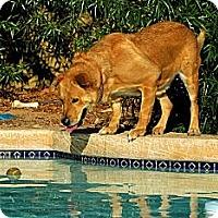 Adopt A Pet :: BRANTLEY - Phoenix, AZ