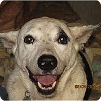 Adopt A Pet :: Jacob - Bakersville, NC