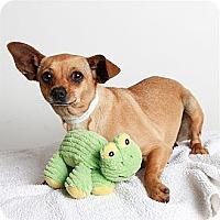 Adopt A Pet :: Daphne - Oakland, CA