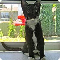 Adopt A Pet :: Otis - Lafayette, CA