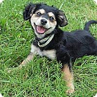 Adopt A Pet :: Bella Rae - Wytheville, VA