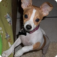 Adopt A Pet :: Odie - Orlando, FL