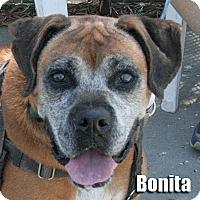 Adopt A Pet :: Bonita - Encino, CA