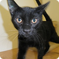 Adopt A Pet :: Paczki - Milwaukee, WI