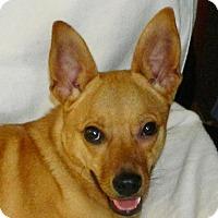 Adopt A Pet :: Tangy - Umatilla, FL
