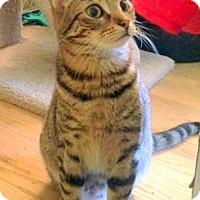 Adopt A Pet :: Kiki - San Leandro, CA