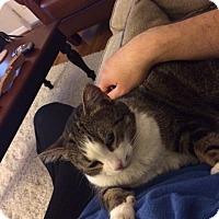Adopt A Pet :: Juliette (URGENT) - Herndon, VA