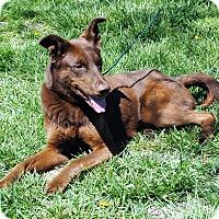 Adopt A Pet :: Cassie - Parsons, KS