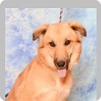 Adopt A Pet :: Casie - Pittsboro, NC
