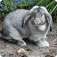 Adopt A Pet :: Smokey - Williston, FL