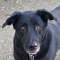 Adopt A Pet :: Max! - Sacramento, CA