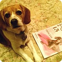 Adopt A Pet :: Lettie - sweetheart - Houston, TX
