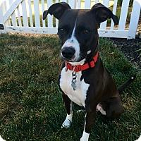 Adopt A Pet :: Daisy Mae - New Oxford, PA