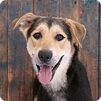 Adopt A Pet :: Frankie - Sudbury, MA