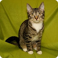 Adopt A Pet :: Jude - Bradenton, FL