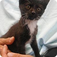 Adopt A Pet :: Leigh - Reston, VA