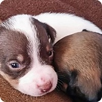 Adopt A Pet :: Ames - ROSENBERG, TX