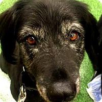 Adopt A Pet :: Quigley - Loxahatchee, FL