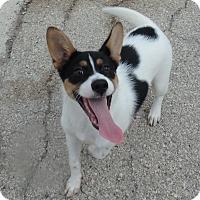 Adopt A Pet :: Juniper - Seguin, TX