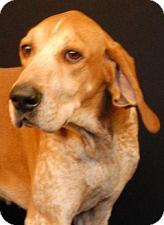 Redtick Coonhound Mix Dog for adoption in Newland, North Carolina - Elliot