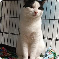 Adopt A Pet :: Max - Templeton, MA