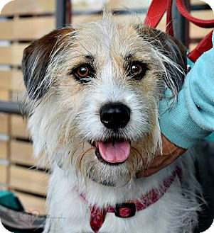 Terrier (Unknown Type, Medium) Mix Dog for adoption in Memphis, Tennessee - Muffin