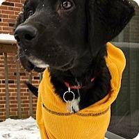 Adopt A Pet :: Sammy - Hockessin, DE