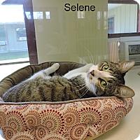 Adopt A Pet :: Selene - Slidell, LA