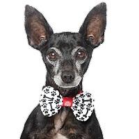 Adopt A Pet :: Nicholas - Los Angeles, CA