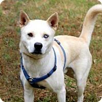 Husky Mix Dog for adoption in Salem, New Hampshire - ZANE