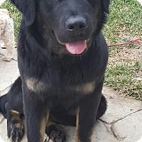 Adopt A Pet :: Owen - House Springs, MO