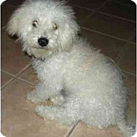 Adopt A Pet :: Chewy - staying with owner! - Houston, TX