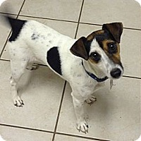 Adopt A Pet :: Chappy in Houston - Houston, TX